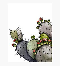 Prickly Pear In Grey and Green Photographic Print