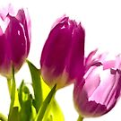 Tulips In The Morning Light - Digital Oil by Sandra Foster