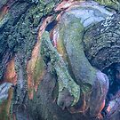 The Tree Bark Collection # 29 - The Magic Tree by Philip Johnson
