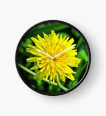 Amazing Yellow Dandelion  Clock
