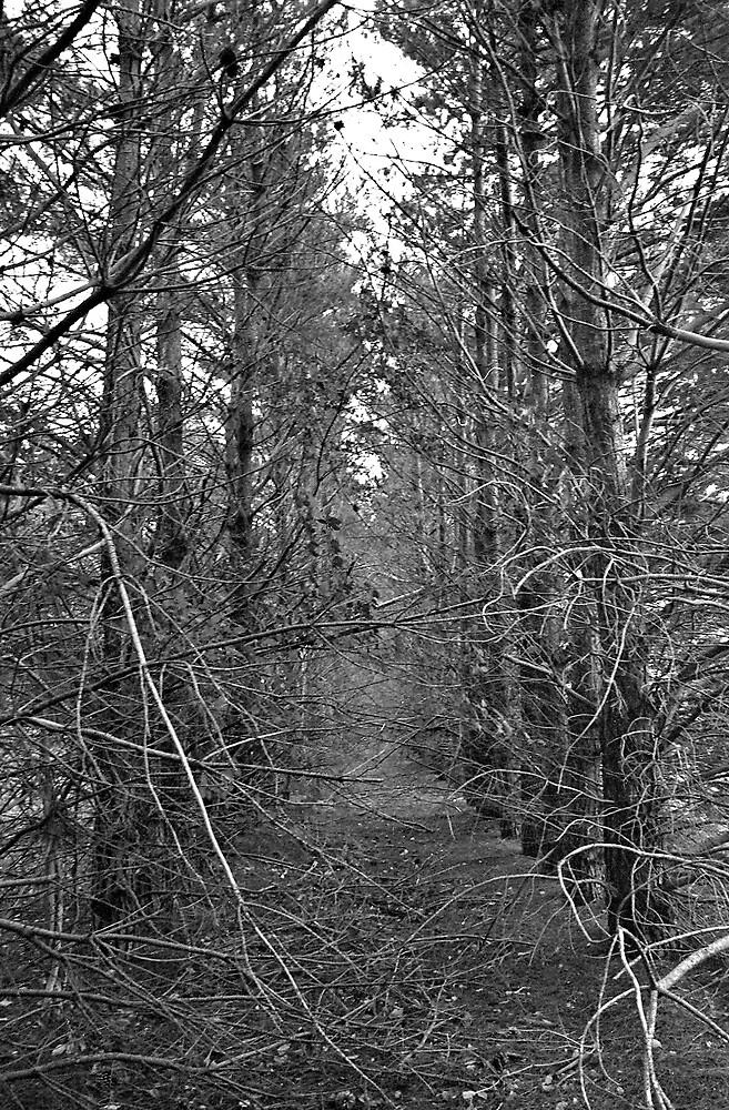 Eerie hallway of nature by Dean Brown