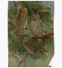 Owls in Parliment Poster