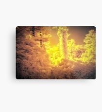 Yellow nuclear winter sunlight - Infrared photography Metal Print