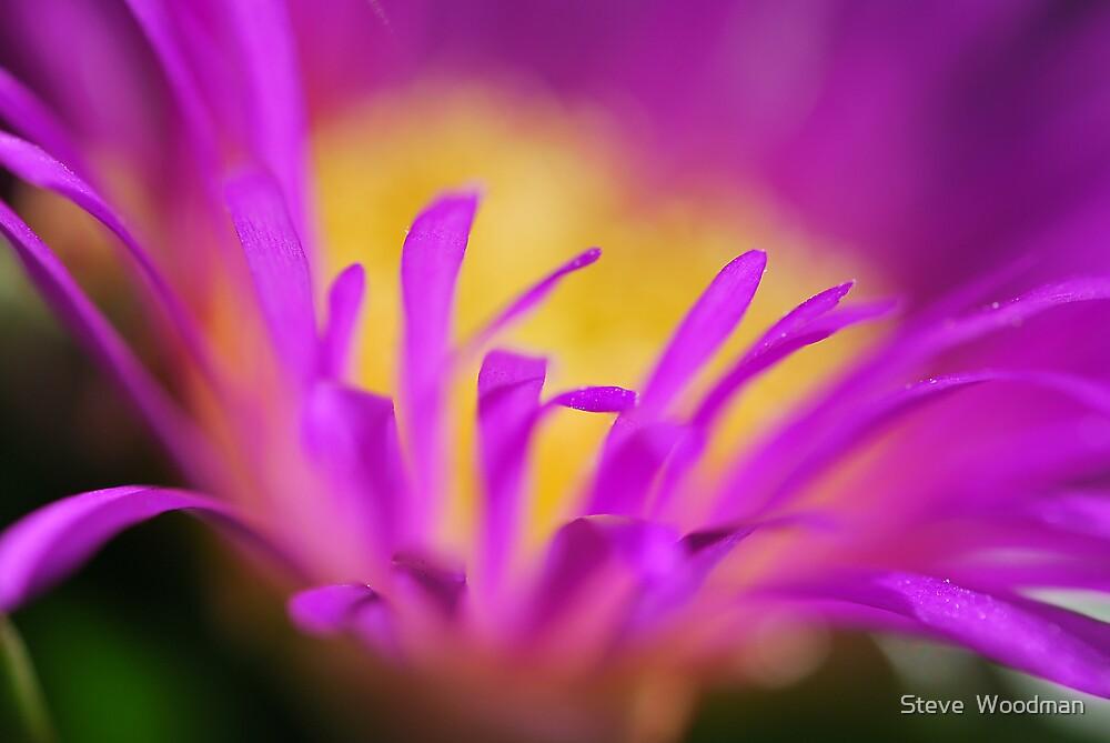 Pink by Steve  Woodman