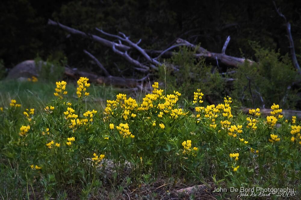 Fields of Yellow by John  De Bord Photography