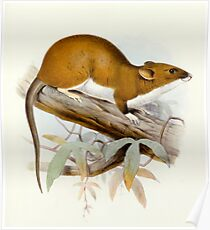 Red Ratte Poster