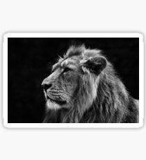 Asiatic Lion BW Sticker