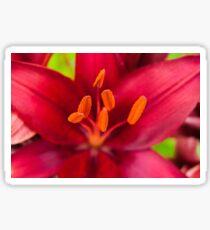 Bright Red Flower Sticker