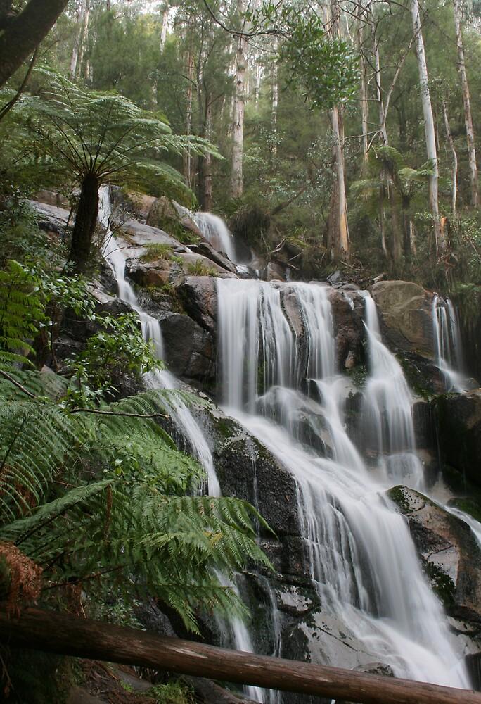 Toorongo Falls by Graeme Hort