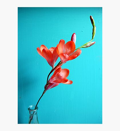 Still Life with Freesia Photographic Print