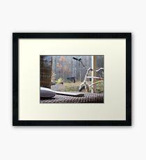 Quiet Cruiser Framed Print