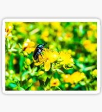 Feeding Beetle  Sticker