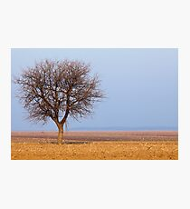 Single tree in plow land Photographic Print