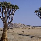 Quiver Trees standing sentinal by Wild at Heart Namibia