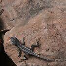 Small lizard on the rock by Wolska