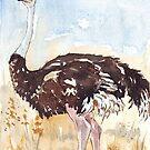 Struthio camelus (Ostrich) by Maree Clarkson