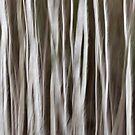 Birch by David Librach - DL Photography -