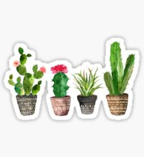 Watercolour Potted Succulents Pattern Sticker