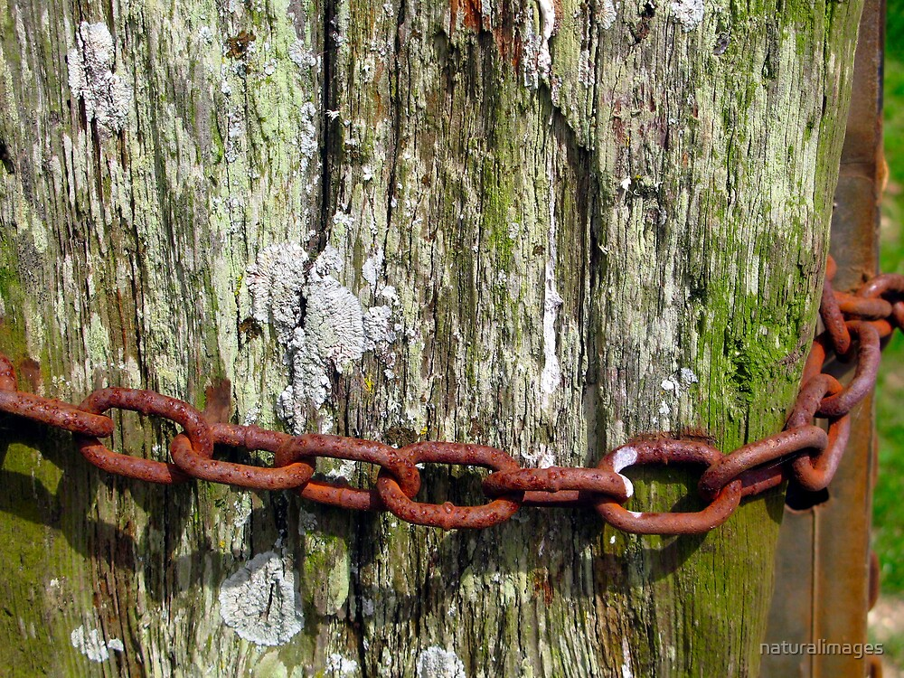 Chained by naturalimages