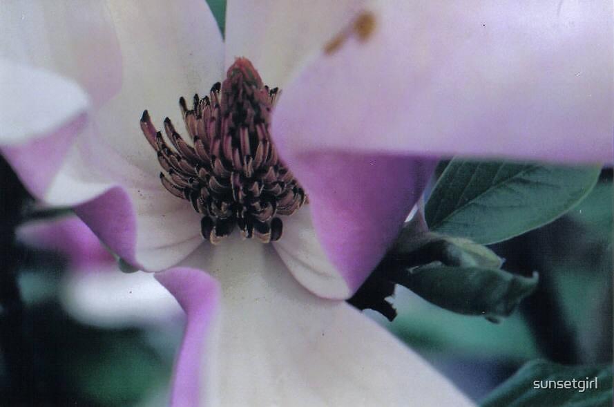 Purple Flower by sunsetgirl