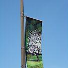 Banner Close-Up by Carolyn Bishop