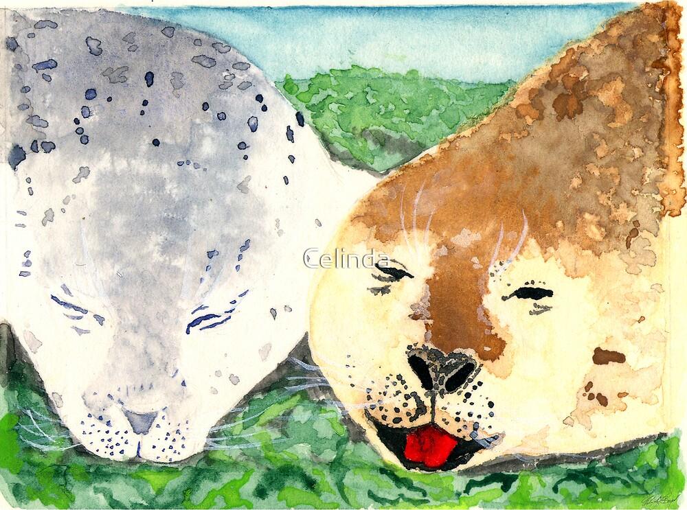 Baby Seals by Celinda
