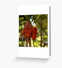 Red Torch Ginger or Ginger Lily in Hawaii Greeting Card