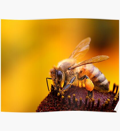 More Honey For Your Pollen Poster