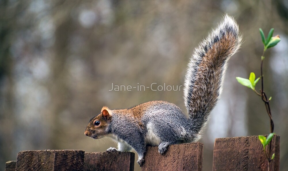 Amazing Tail by Jane-in-Colour