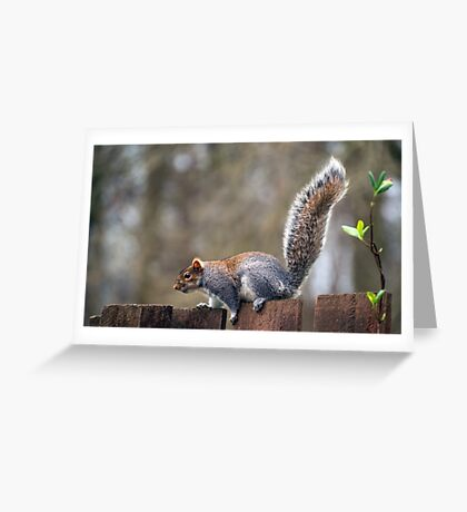 Amazing Tail Greeting Card