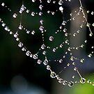 Natures Gems by AnnDixon