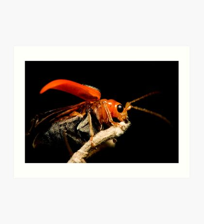 Orange Beetle Art Print