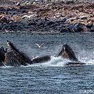 Humpbacks by John  Kapusta