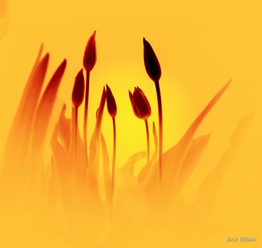 Midnight Sun by Jack Wilson
