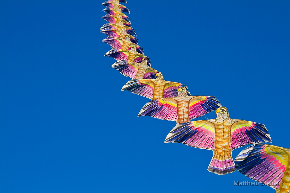 Eagles by Matthew Stewart