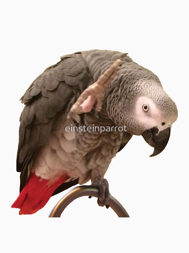 Einstein-Afrikaner Grey Parrot Waving von einsteinparrot