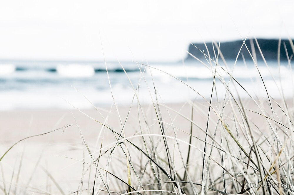 Beach grass by Dave  Gosling Photography