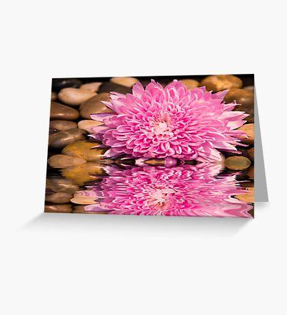 Pink Spider Chrysanthemum With River Rocks Greeting Card