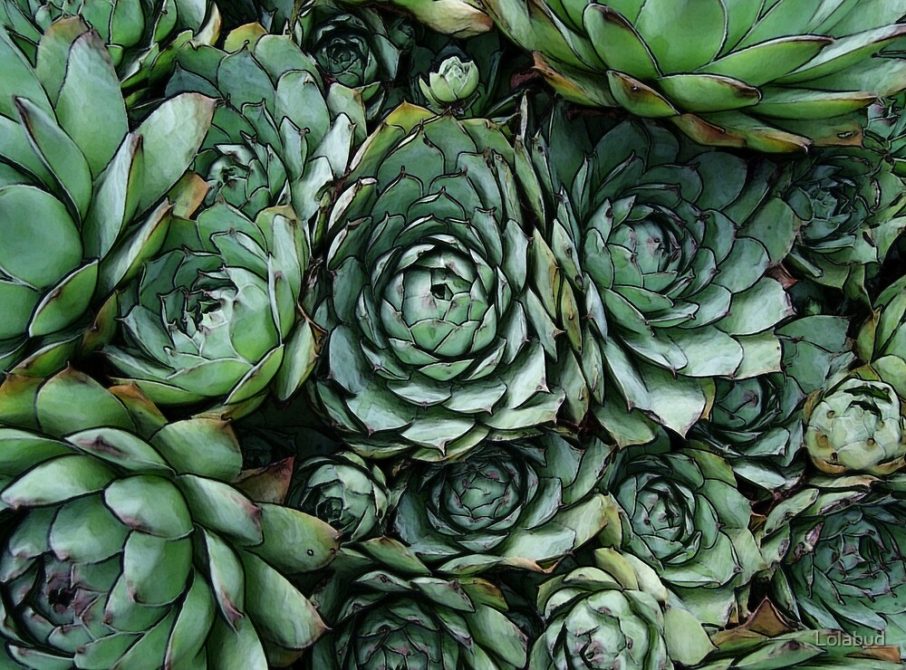 Hen and Chicks by Lolabud