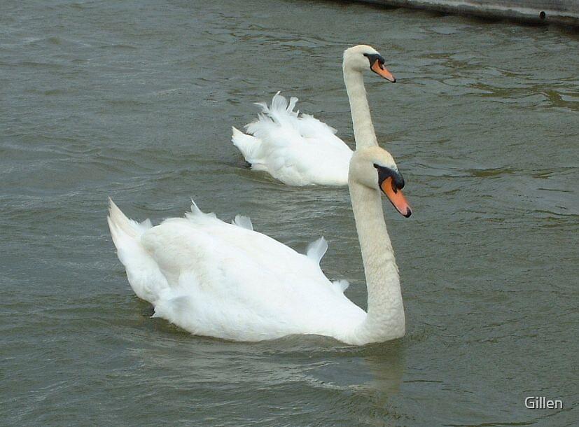 Swans II by Gillen