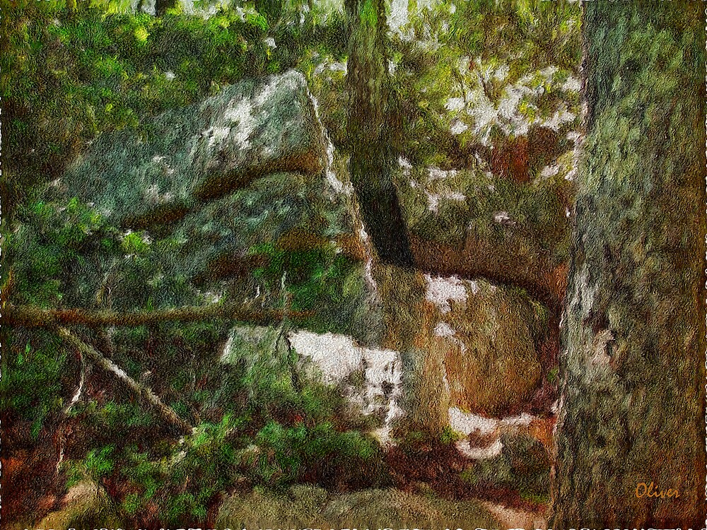 Lichens, Wood And Stone by Charles Oliver