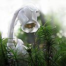 Ghost Flower by Danielle Loscig