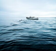 Dolphins in open sea by unikatdesign