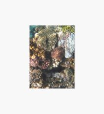 Vietnam Nha Trang Snorkeling Schnorcheln Korallen Corals  Art Board