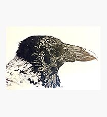 Birds In Ink Part 1: Hooded Crow Photographic Print