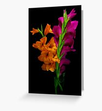 Contrasting Colors Greeting Card