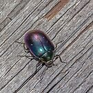 Beetle with colour  by Rick Playle