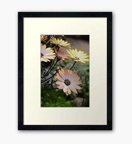 Summer time Flowers Framed Print
