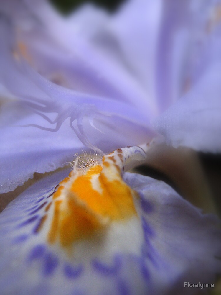 iris revisted II by Floralynne