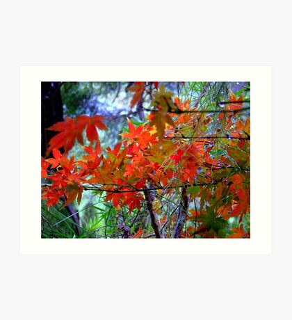 """""""Changing Colours""""... Art Print"""